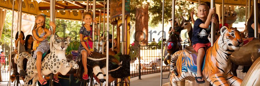 carousel at zoo