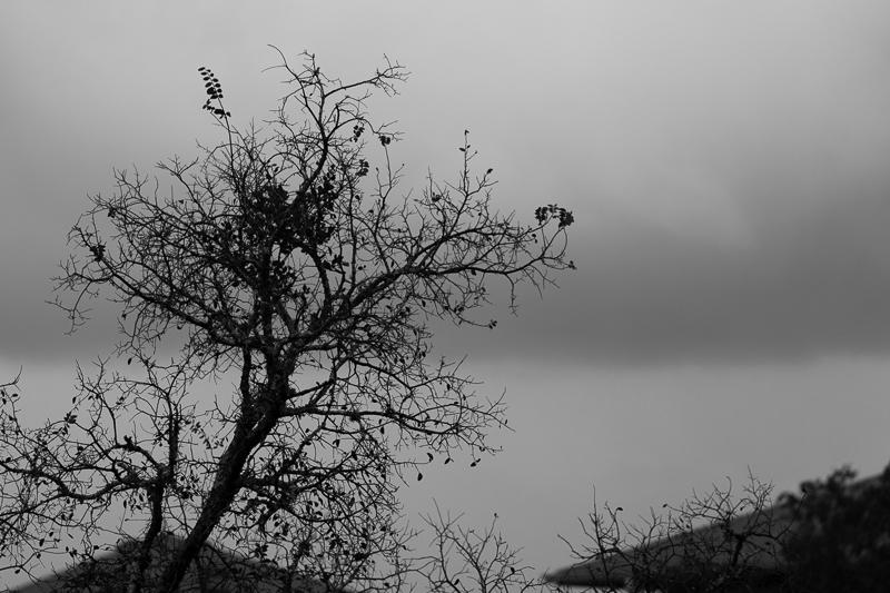 gray day tree