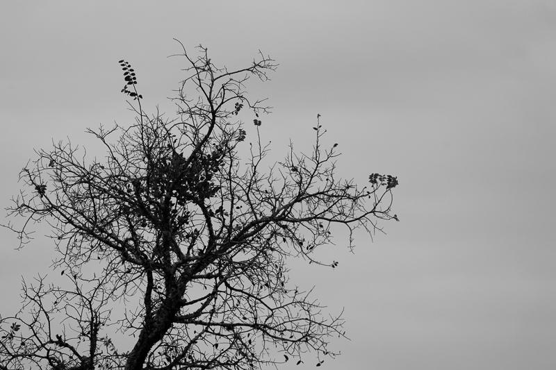 black white tree 112616