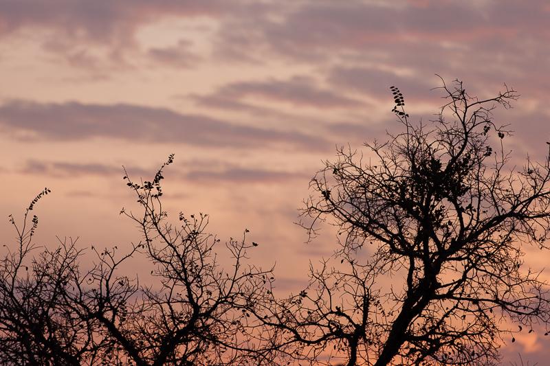 november sunrise 112716