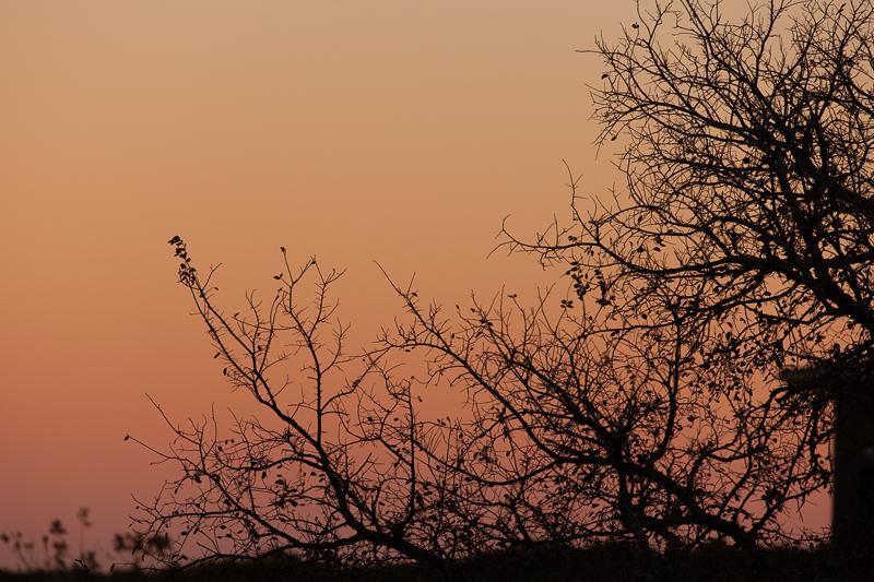 sunset 11302016