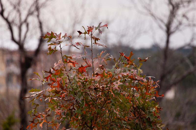 autumn leaves 12022016