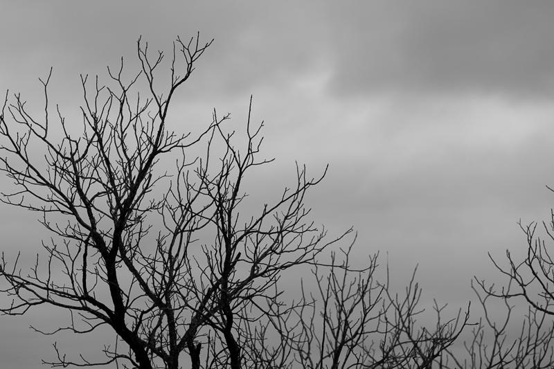 rainy sunday 12042016