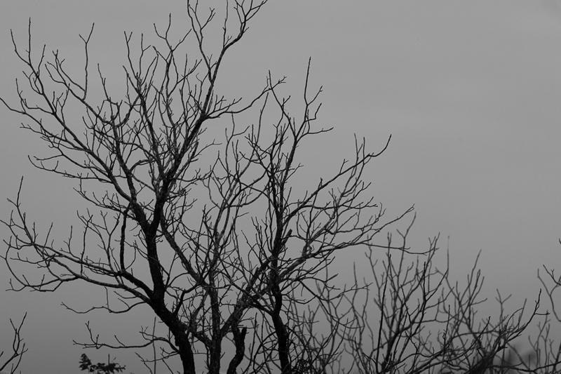 bwtree 12062016
