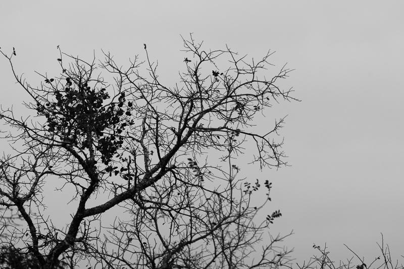 tree 12072016