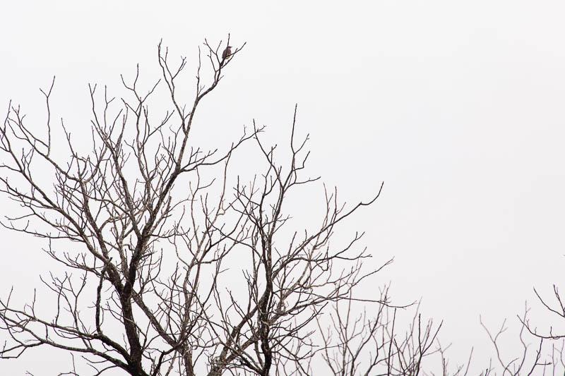 december bird