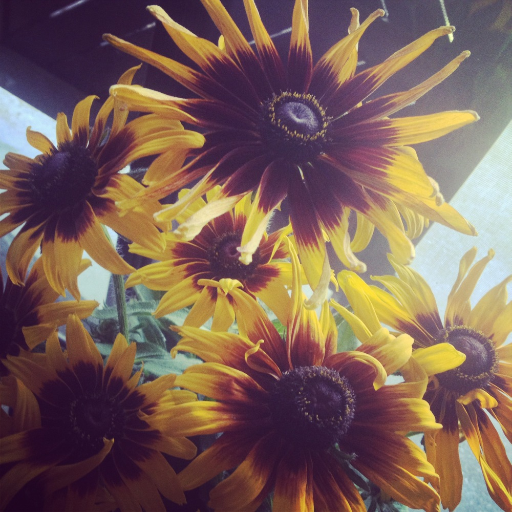 gothic sunflowers.JPG
