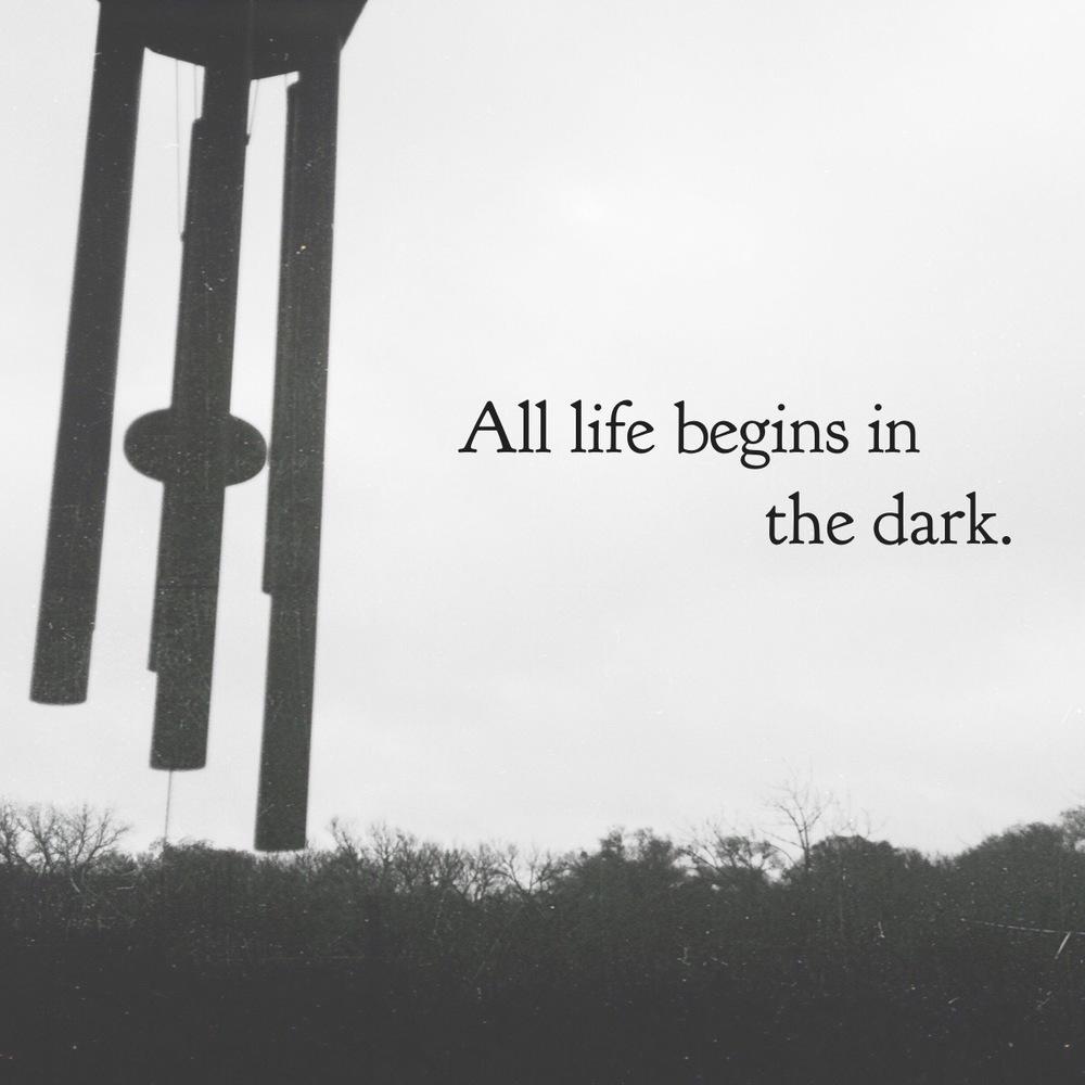 Life begins in the dark.