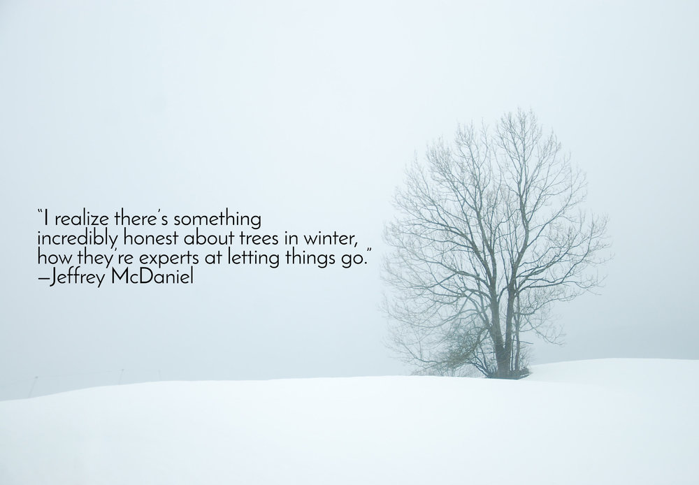 """I realize there's something incredibly honest about trees in winter, how they're experts at letting things go.""—Jeffrey McDaniel"