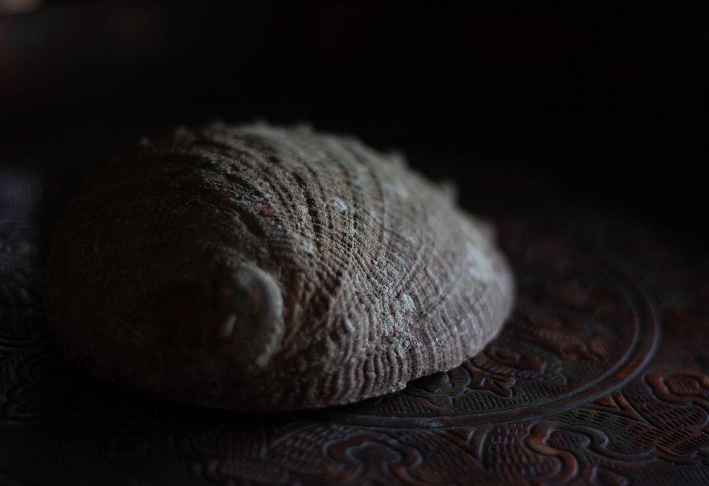 Abalone-underside-by-Hillary-McFarland.jpg