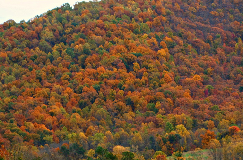 Autumn view of Afton Mountain from the bottom of the Inn driveway