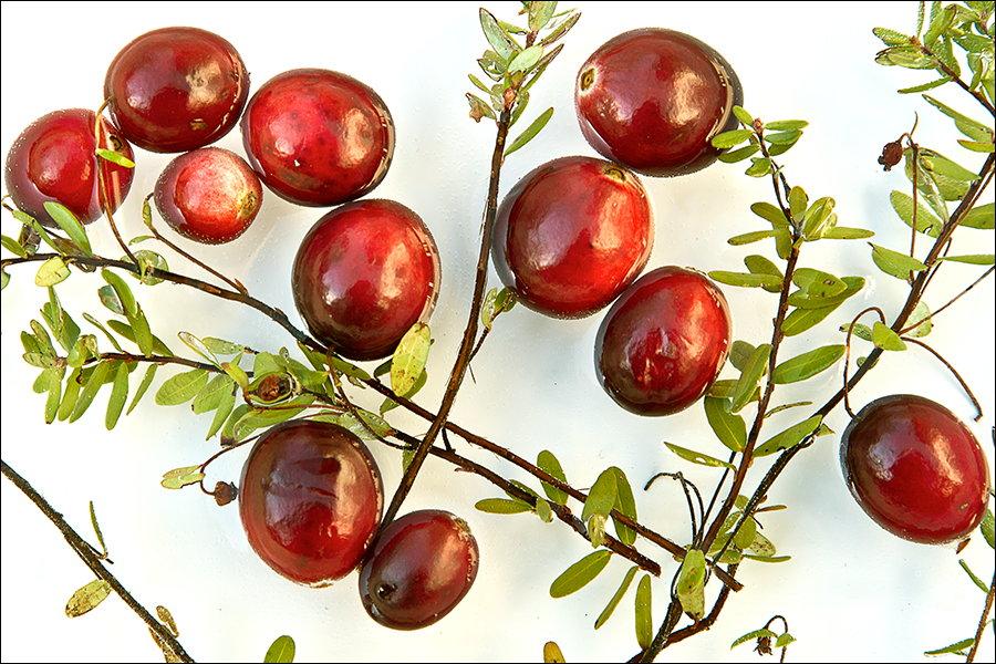 Cranberry-05.jpg