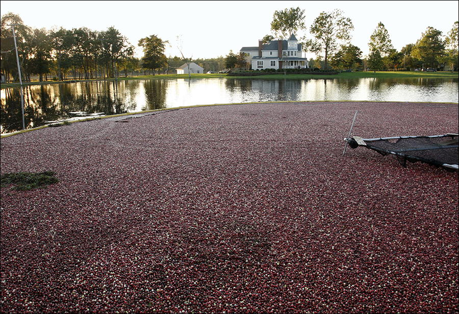 Cranberry-120.jpg