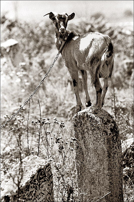 Forgotten Stones - Goat.jpg