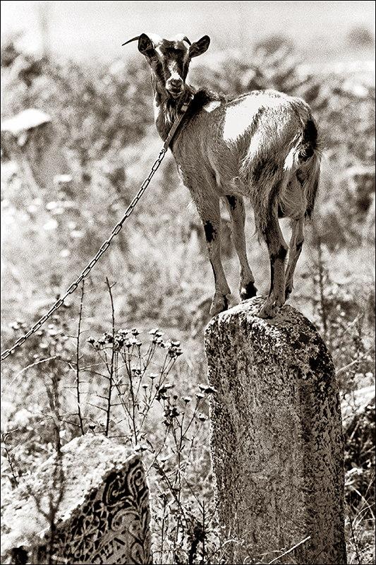 Forgotten Stones - Goat.jpg