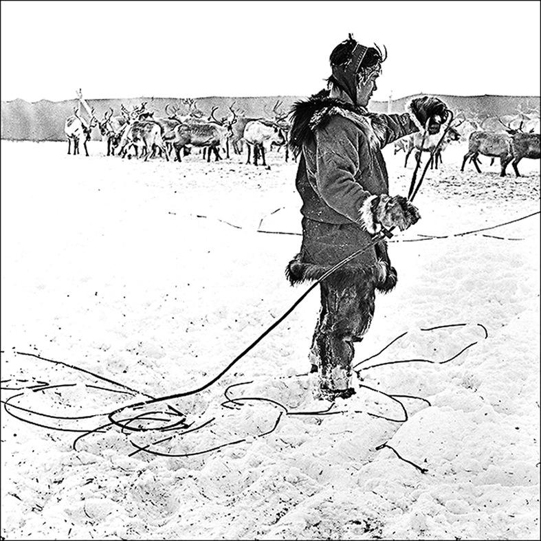 Herdsman.jpg