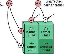 Punnett square depicting  the way autosomal traits are passed along. My genetic make up has 2 recessive alleles for Stargardt's like the affected child above.