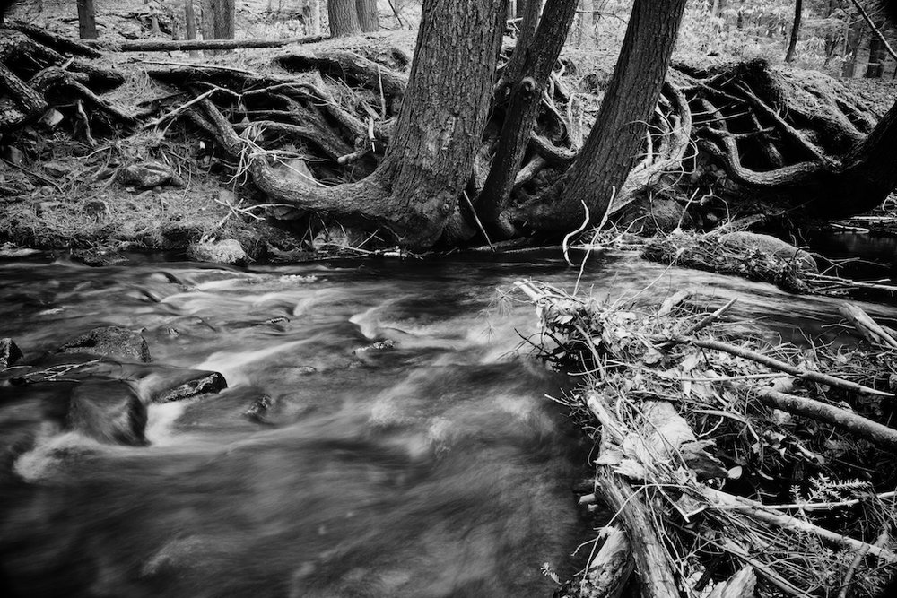 hickory run state park85 - Version 2.jpg