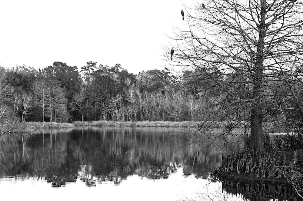 Lake Alice 6.jpg