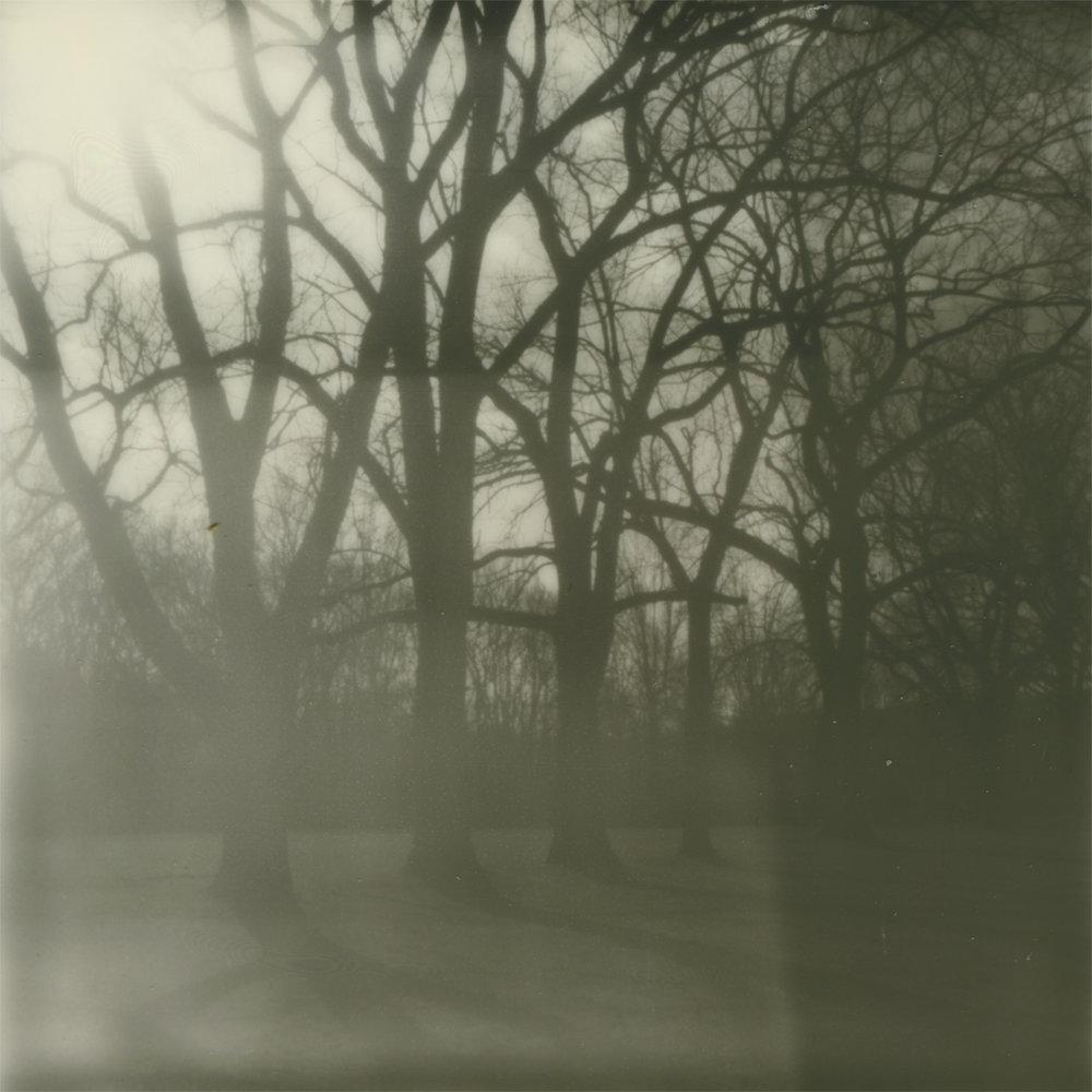Tree Lined.jpg