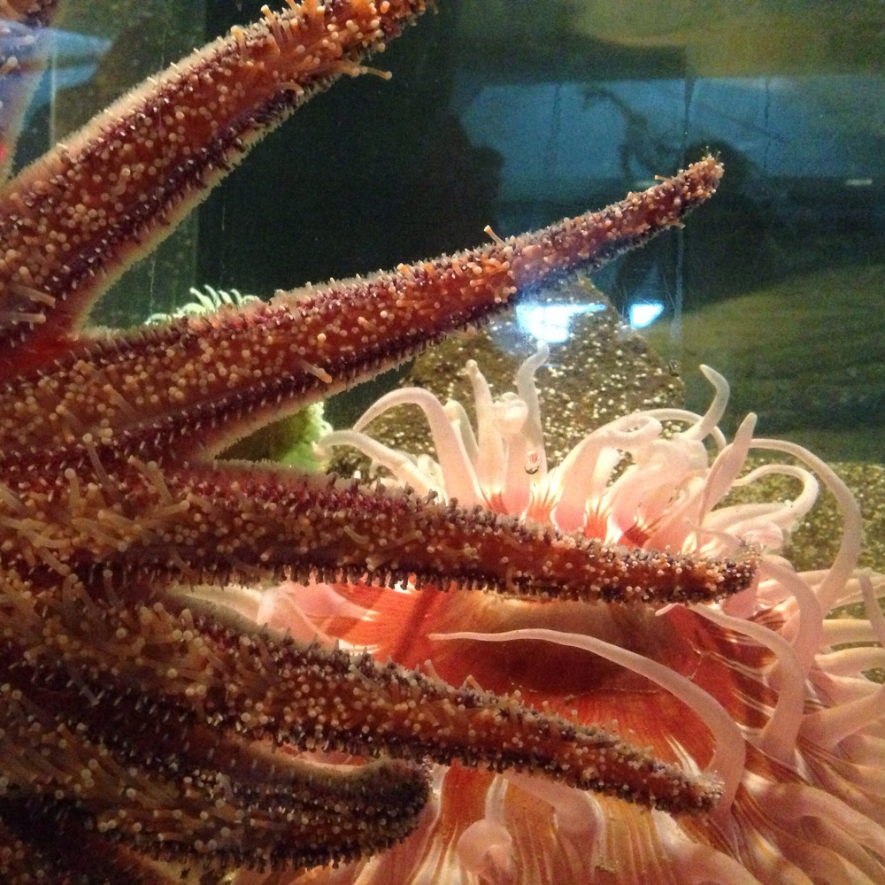 Sea stars and anemone