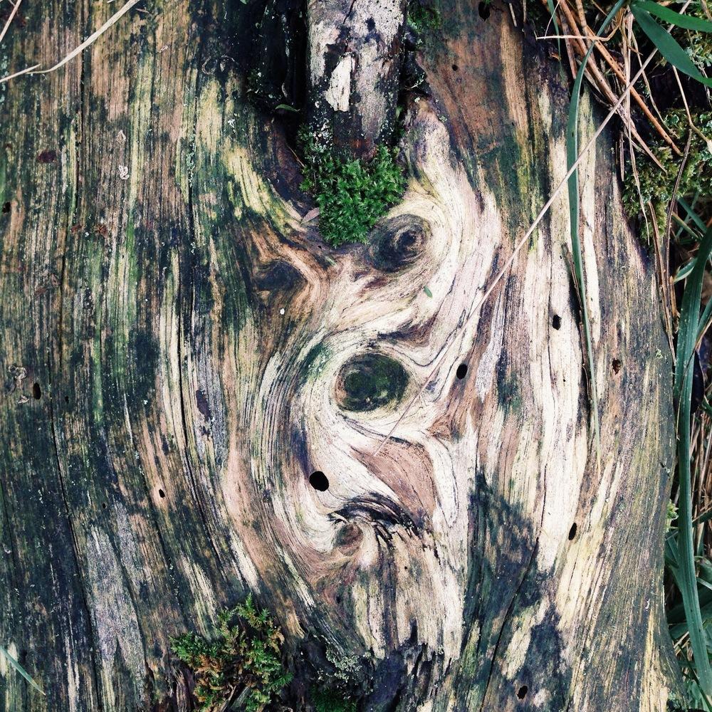 forest face.jpg
