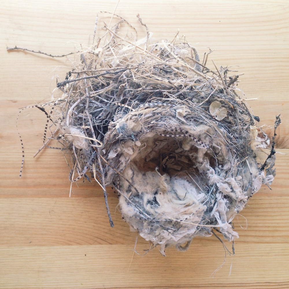 Nest beauty