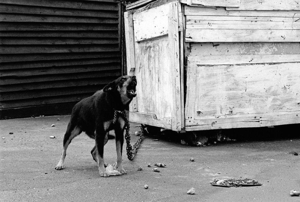 Bark, 2009
