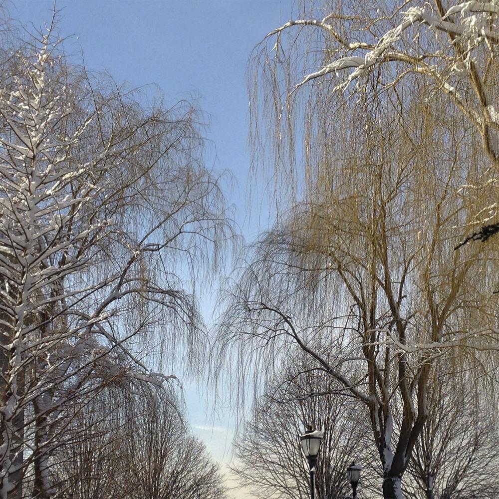willows winter.jpg