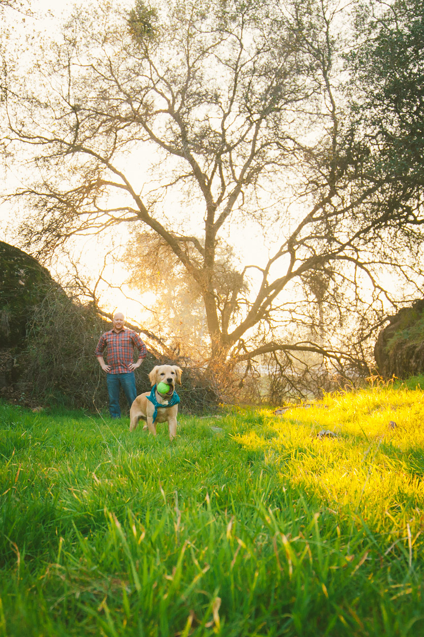 pet portraits central valley