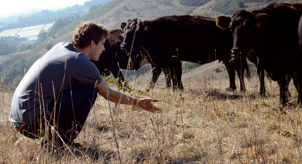 Jon Proctor and cows - FEED the Change 2013.jpg