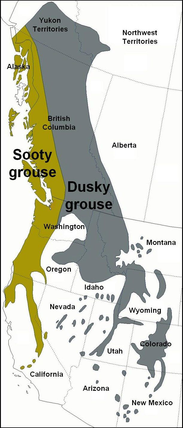 Ranges of the Sooty and Dusky Grouse.