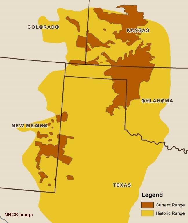 Lesser Prairie-chicken Range.