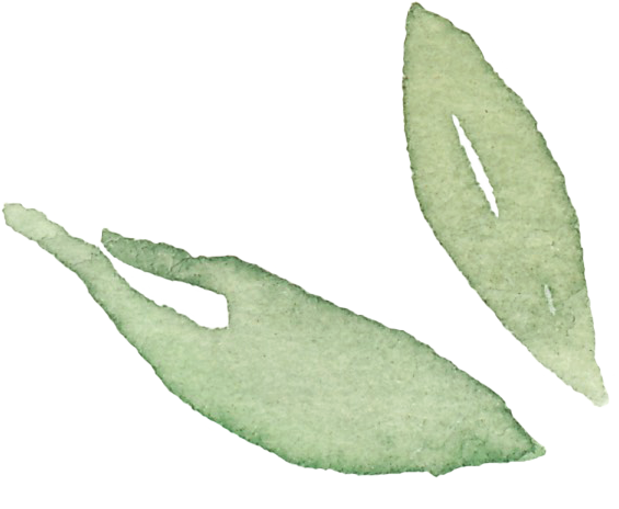 Two-leaves.png