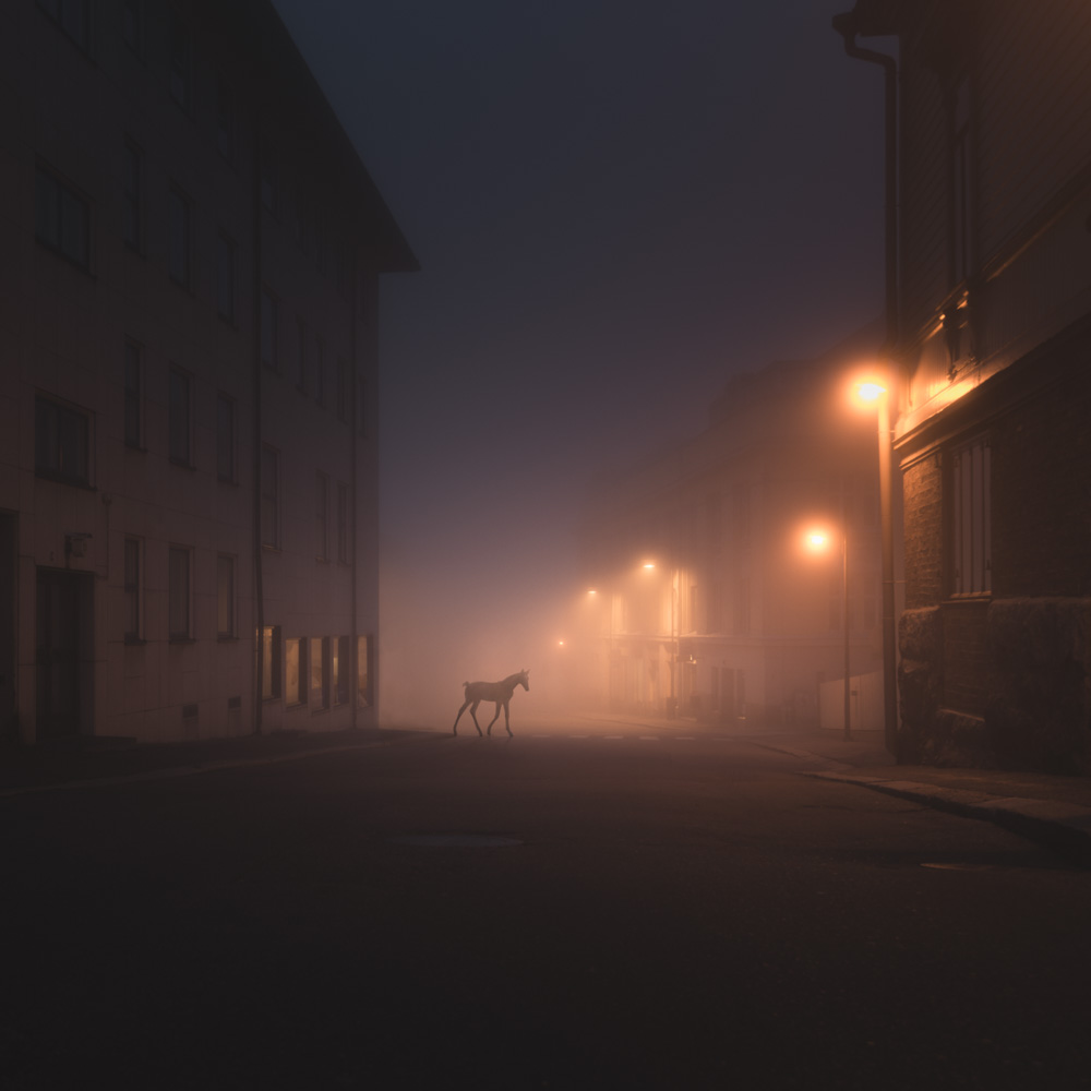 Mikko Lagerstedt - Foal - 2013 - Porvoo, Finland -  Night Animals