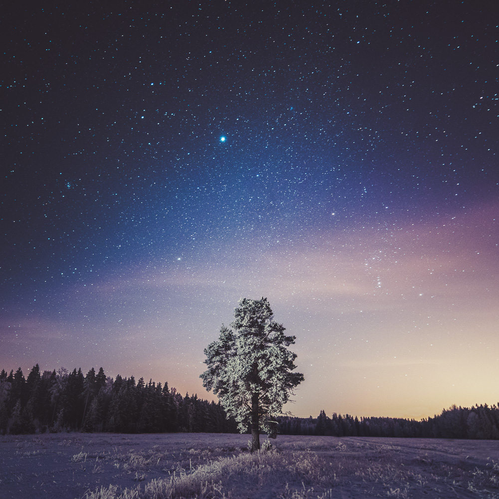 Mikko-Lagerstedt-Something-About-Tree.jpg