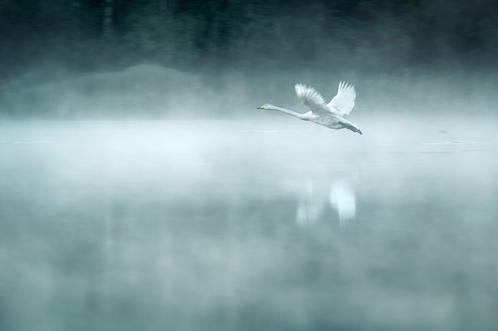 Mikko-Lagerstedt-Morning-Flight.jpg