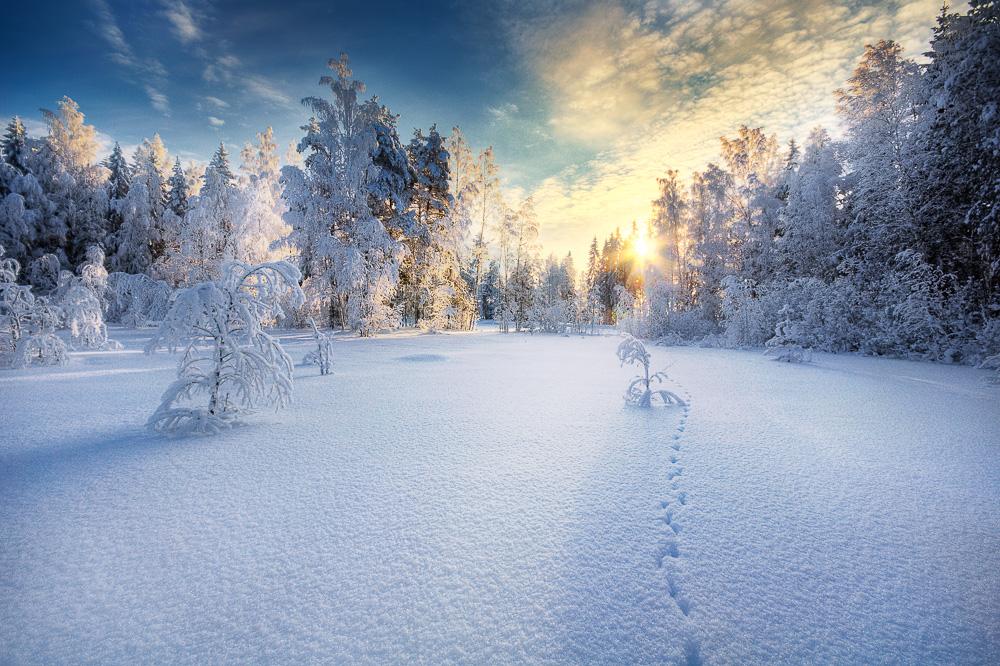 Mikko-Lagerstedt-Winter.jpg