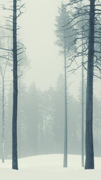 Mikko-Lagerstedt-2.jpg