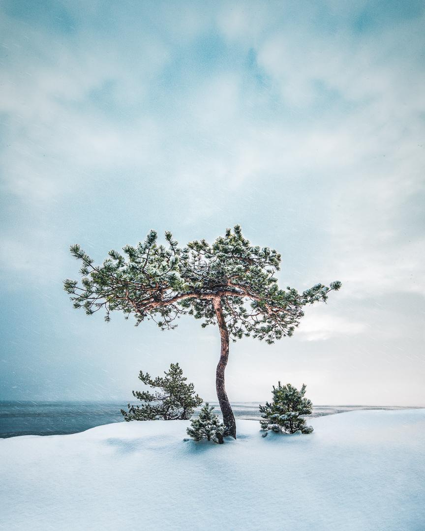 Lonely Tree - Mikko Lagerstedt 2018 - Emäsalo, Finland