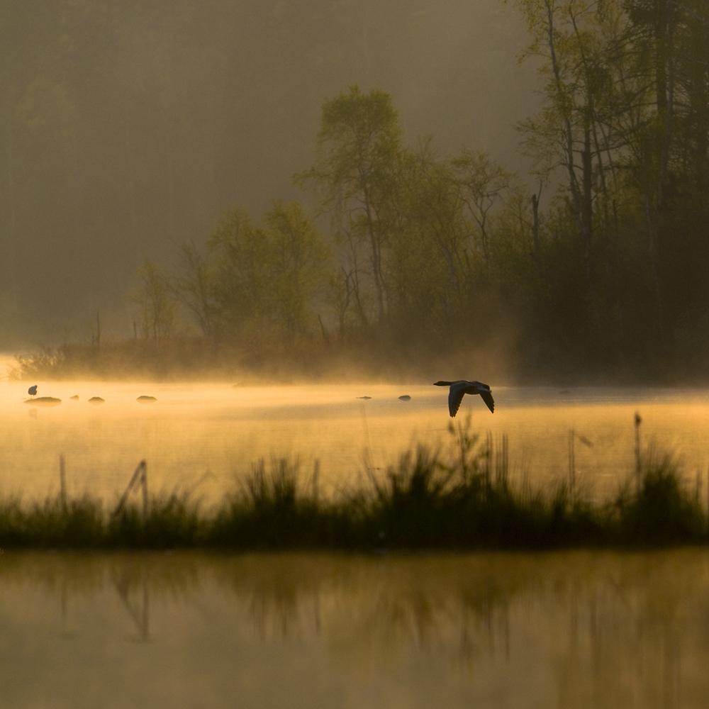Morgon över Hjortseryds sjön