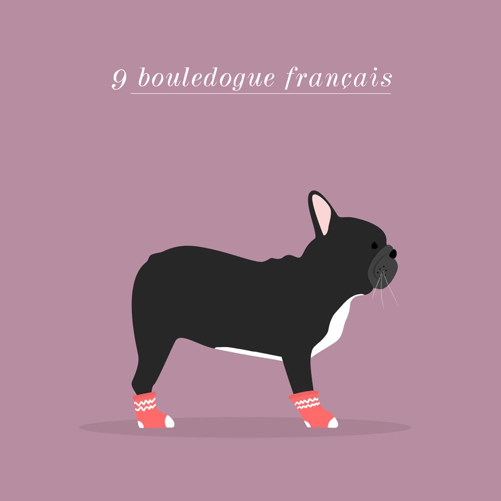 Charlene Girodet-Bouledogue français