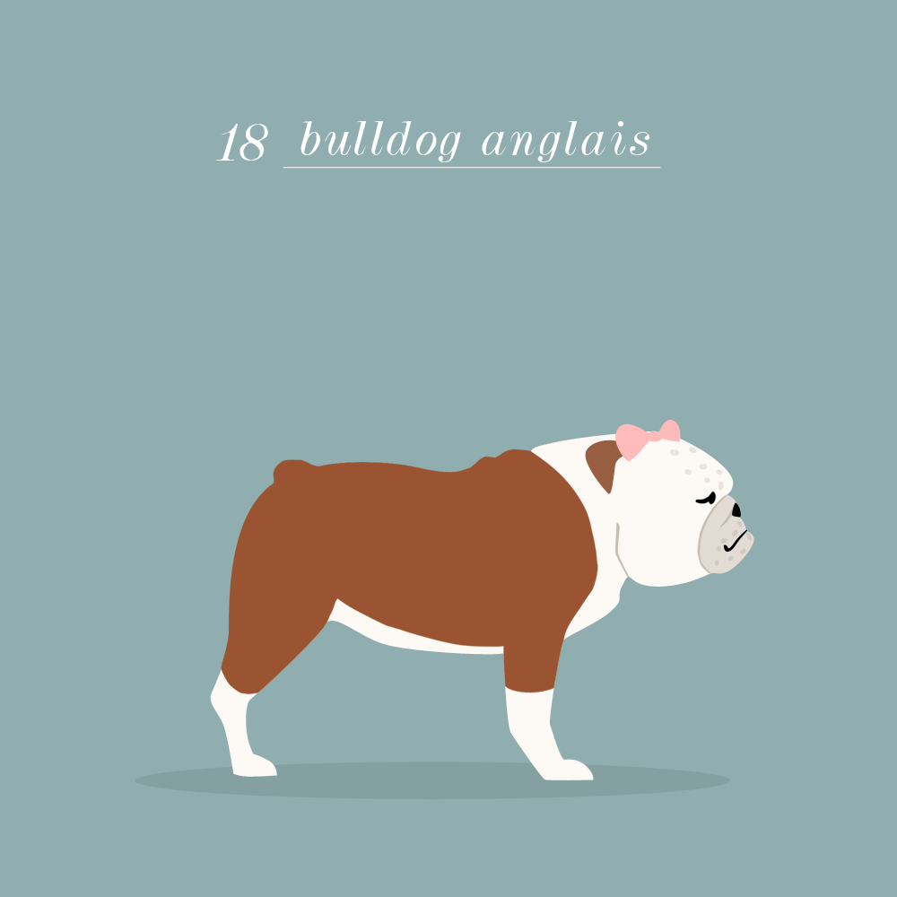Charlene Girodet-Bulldog anglais