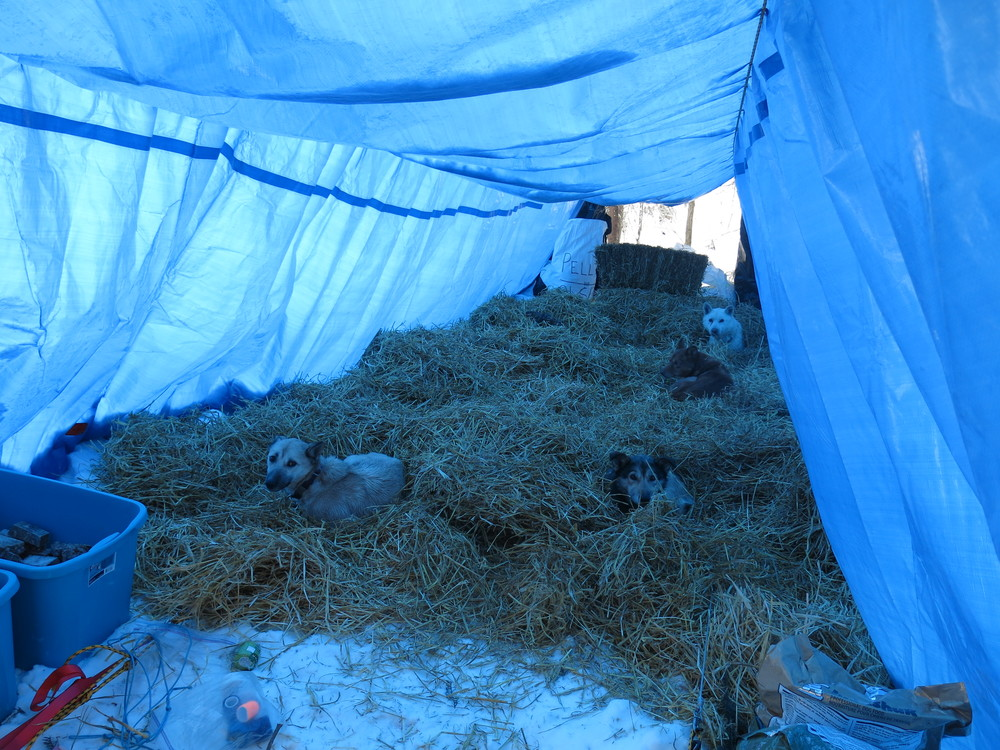 Find the doggies in a hay stack -- there are eleven!