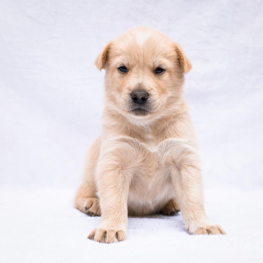 Uno- Puppy