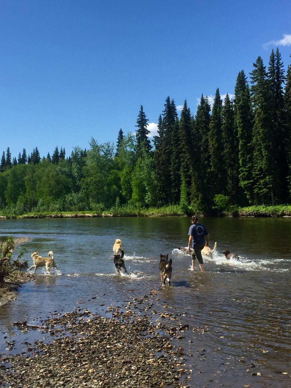 Chena River walking