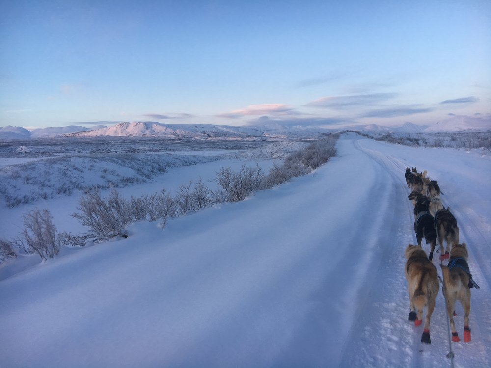 A few hours of daylight mushing.