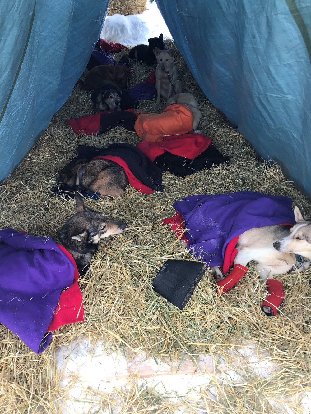 50 pups resting.jpg