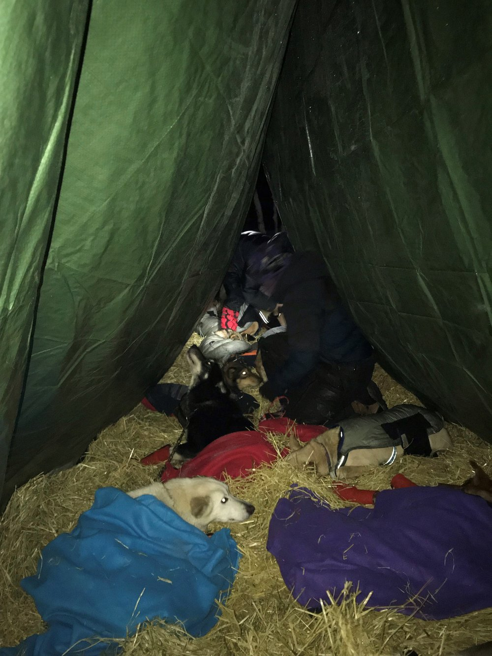 55 ready in tent.jpg