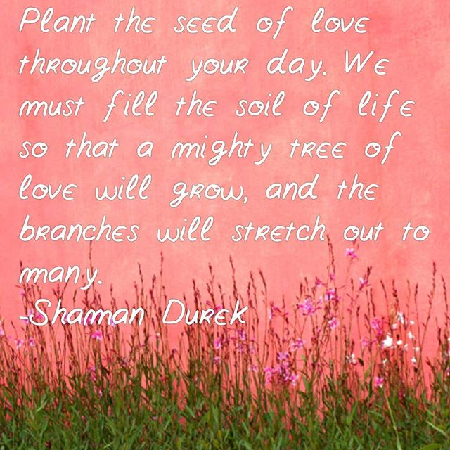 Everyday you get a chance to #plant a #seed of love in your conversations and interactions with others. It's a way to give back to life and earth in a very powerful choice. Infuse love into everything. Grow the tree. #shamandurek #htchtw #loveisthecure #lovegrows